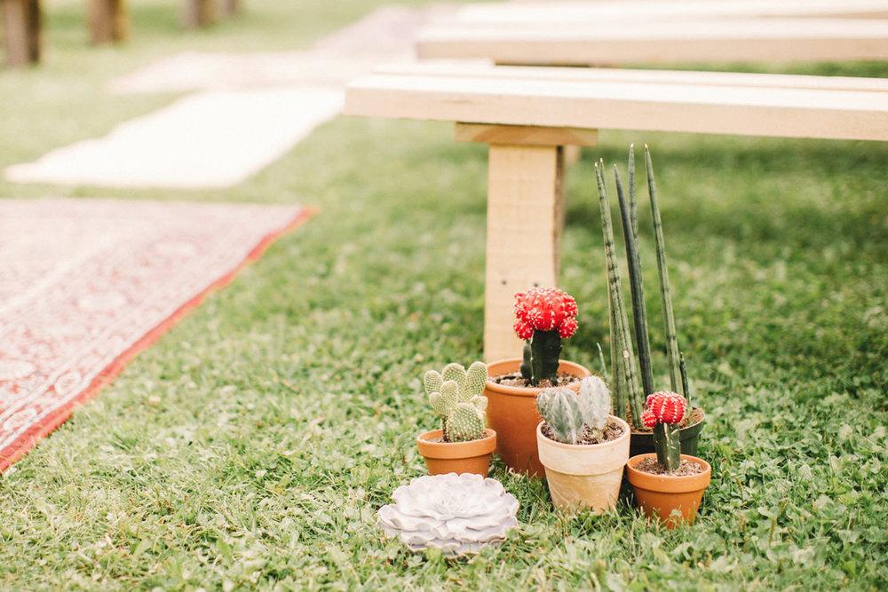 wedding cactus, wedding succulents
