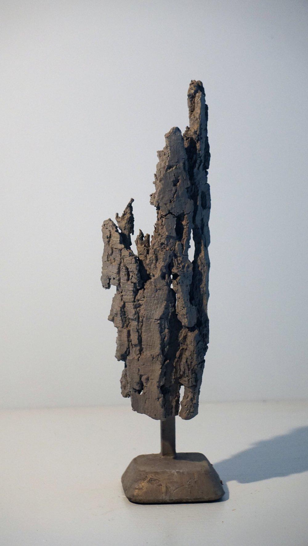 Bark #16