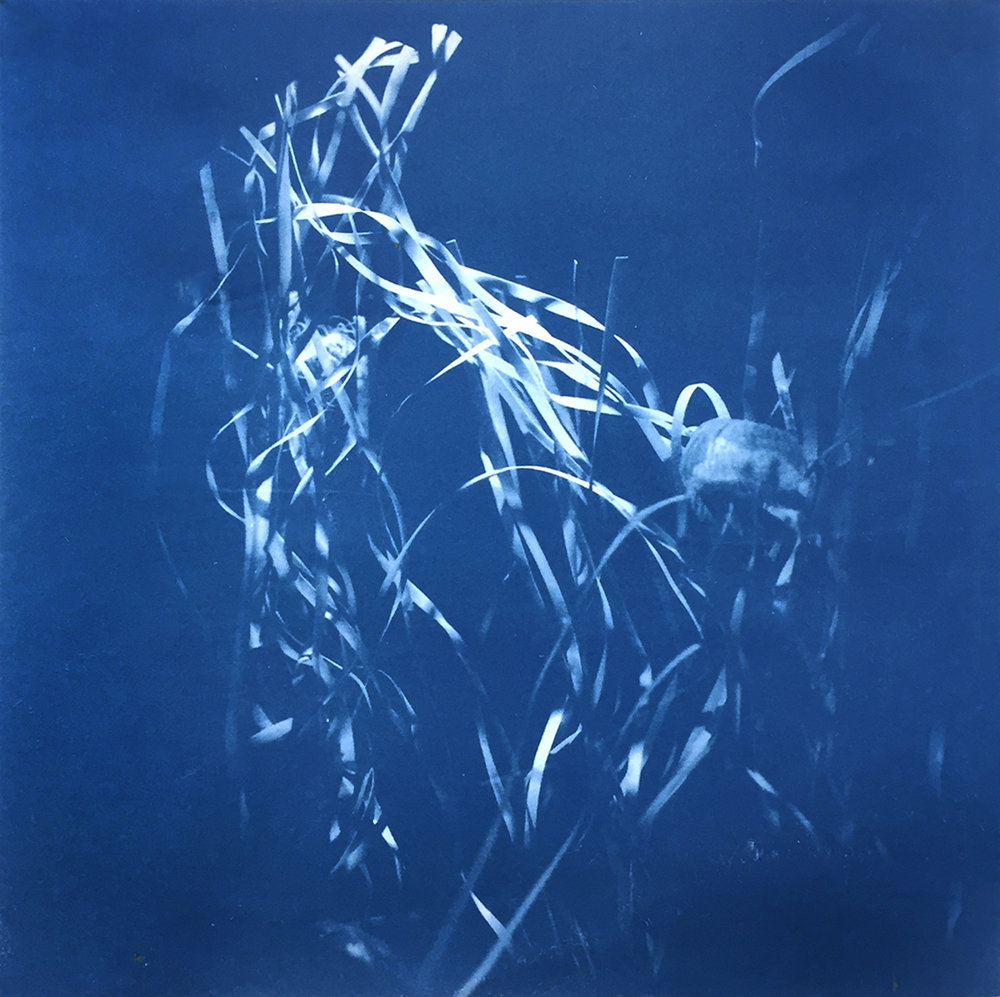 (I) | Cyanotype on Rice Paper | 8in x 8in | 2018