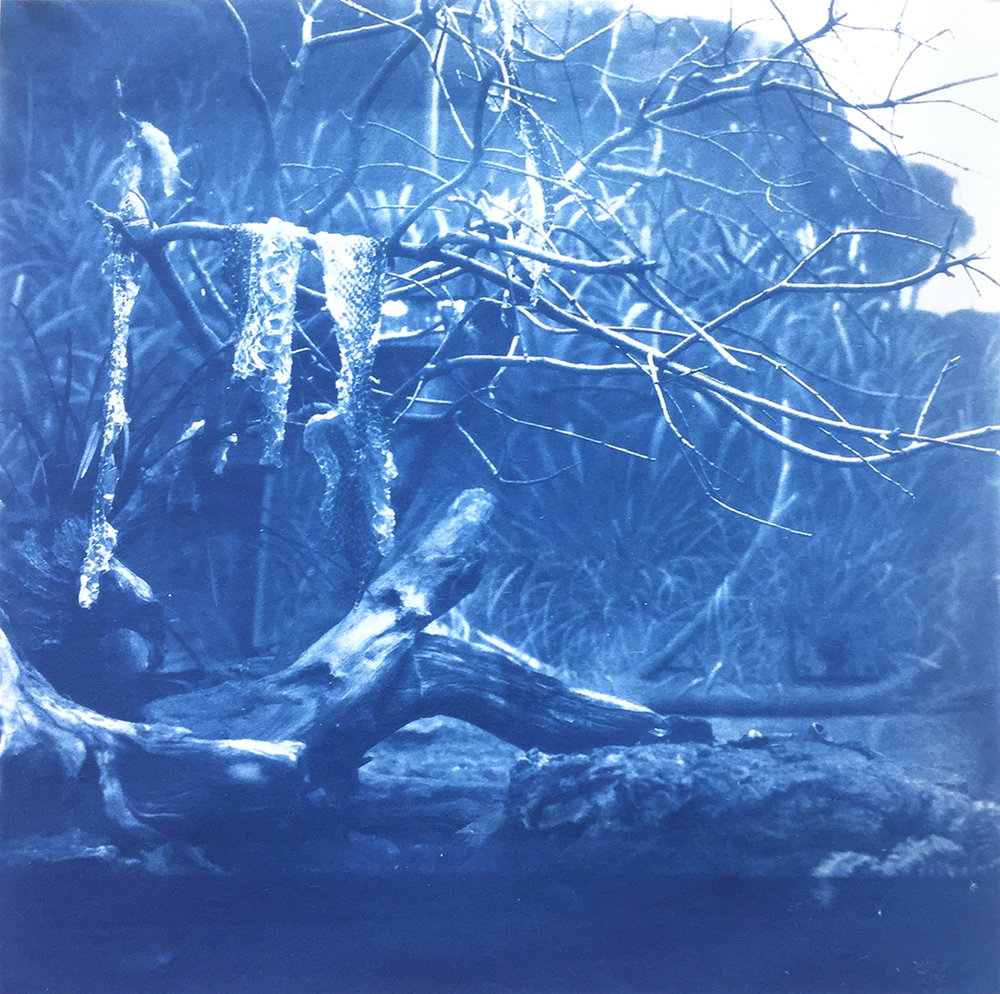 (V) | Cyanotype on Rice Paper | 8in x 8in | 2018