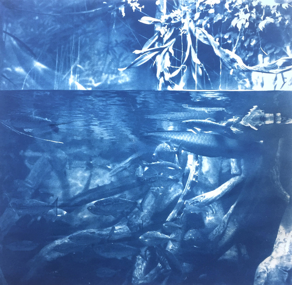 (III) | Cyanotype on Rice Paper | 8in x 8in | 2018