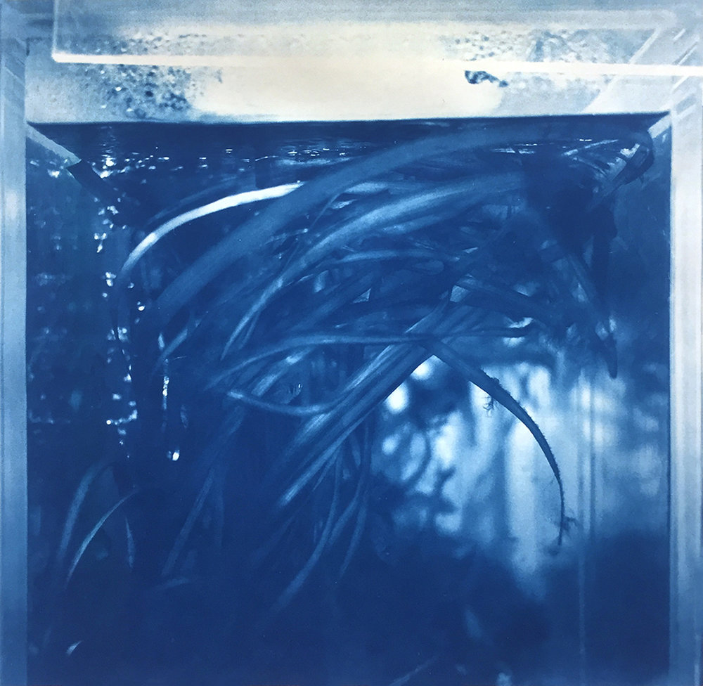 (VI) | Cyanotype on Rice Paper | 8in x 8in | 2018