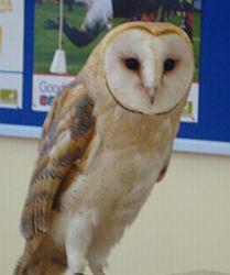 owltime.jpg
