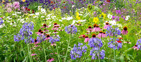 GARDENERS: Let's meet at an RHS or National Trust place.