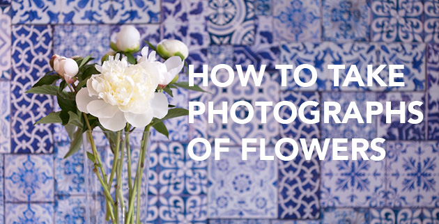 how-to-take-photographs-of-flowers