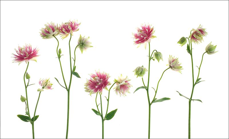 iphone high key flowers.jpg