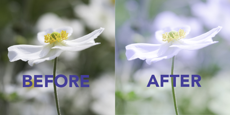 japanese anemone before after.jpg