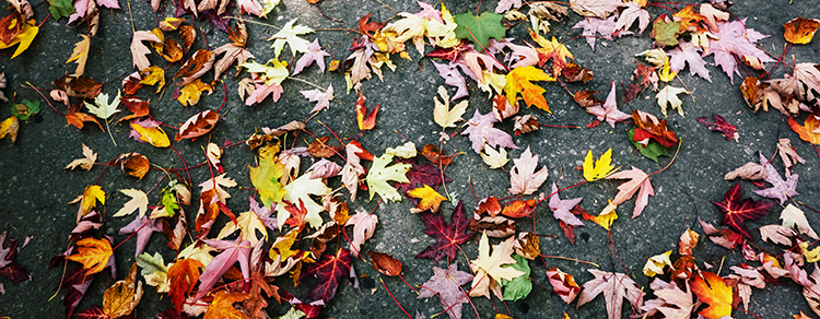 leaves on the ground ali inay.jpg
