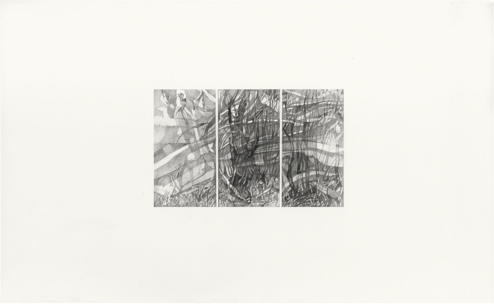 November Woods , 2016. Pencil on Strathmore Bristol. 26.5 x 43.1 cm.