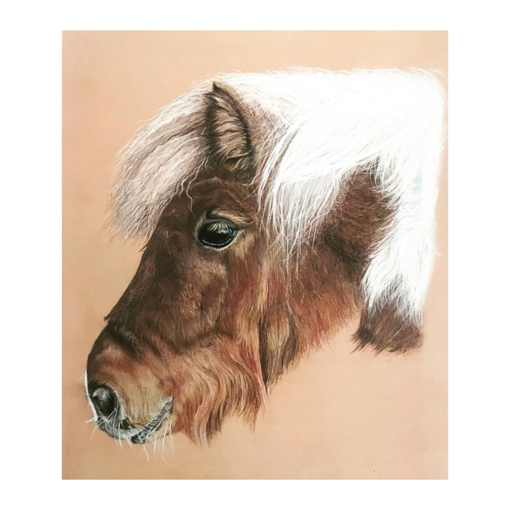 - Equine Portraits. Please get in touch for commissioned pieces.