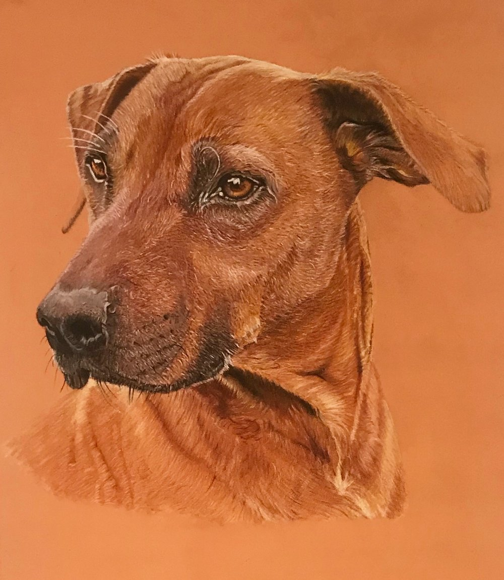 - Dog Portraits. Please get in touch for commissioned pieces.