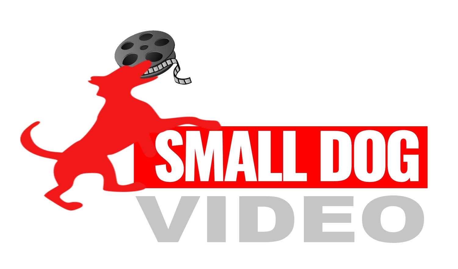 Small Dog Video