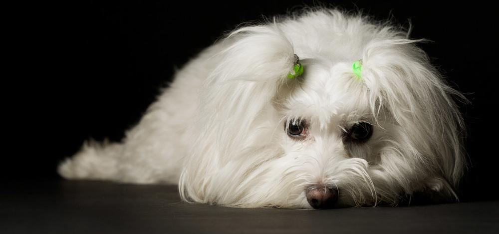 Dog_5.jpg