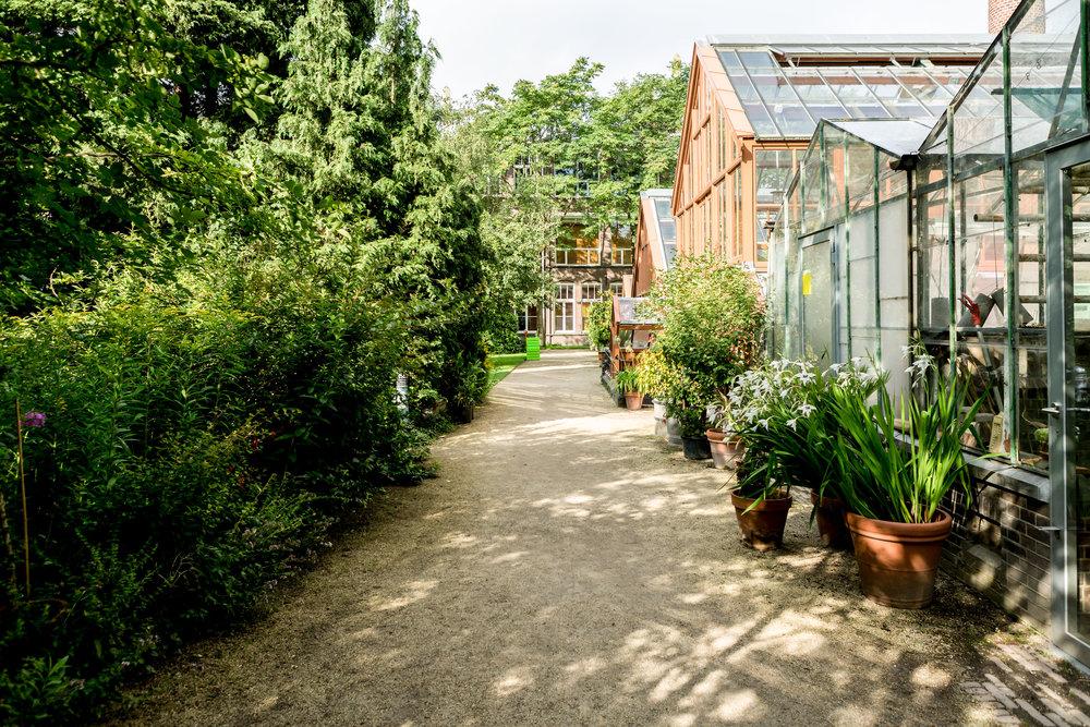 Lize Kraan | Oude Hortus zomer 1.jpg