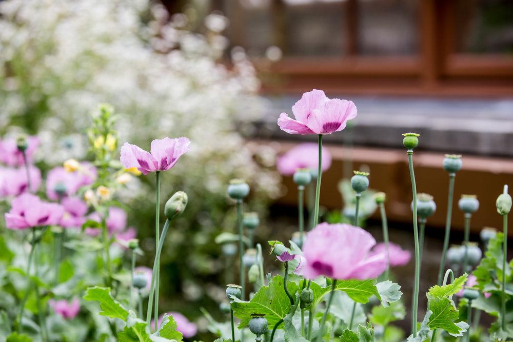 Lize Kraan | Oude Hortus zomer 8.jpg