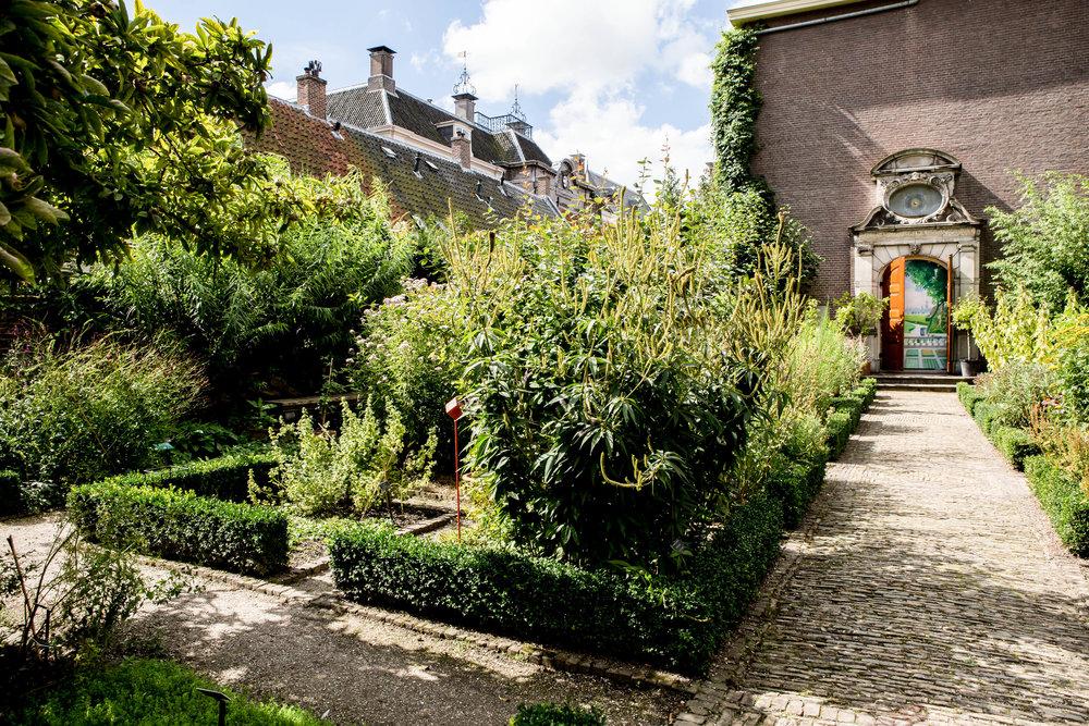 Lize Kraan | Oude Hortus zomer 10.jpg