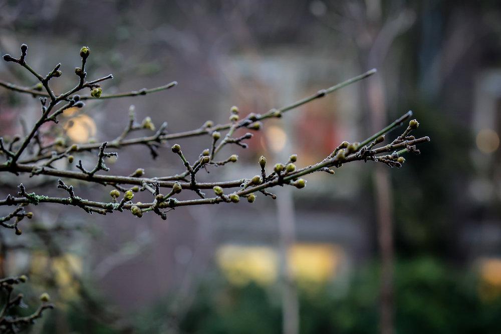 Lize Kraan | Oude Hortus winter 1.jpg