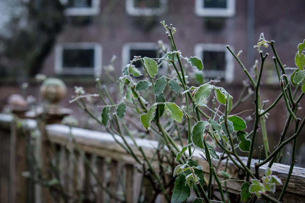Lize Kraan | Oude Hortus winter 3.jpg