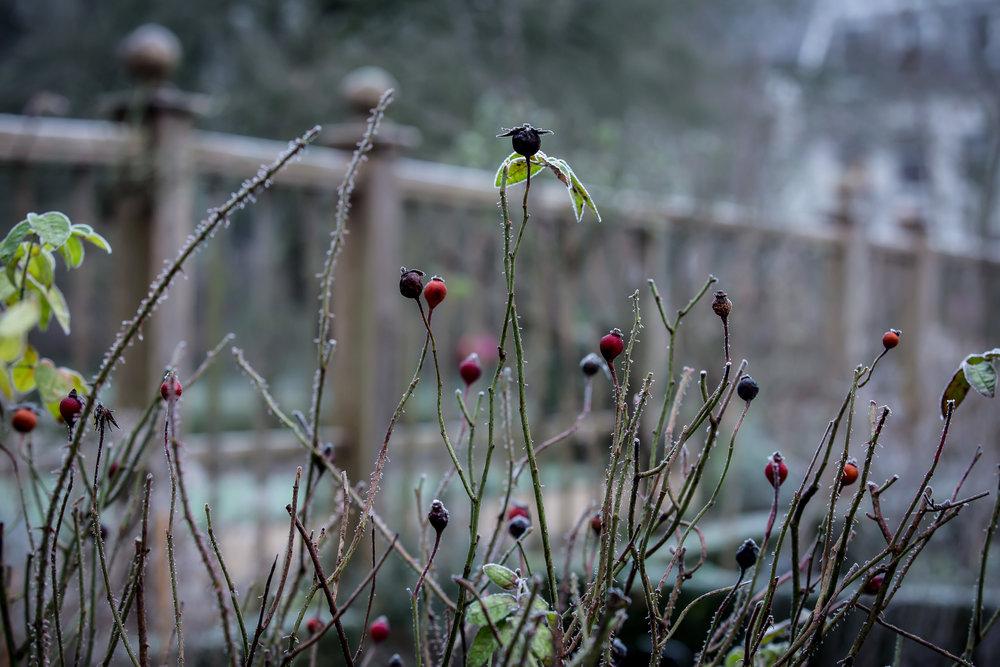 Lize Kraan | Oude Hortus winter 4.jpg