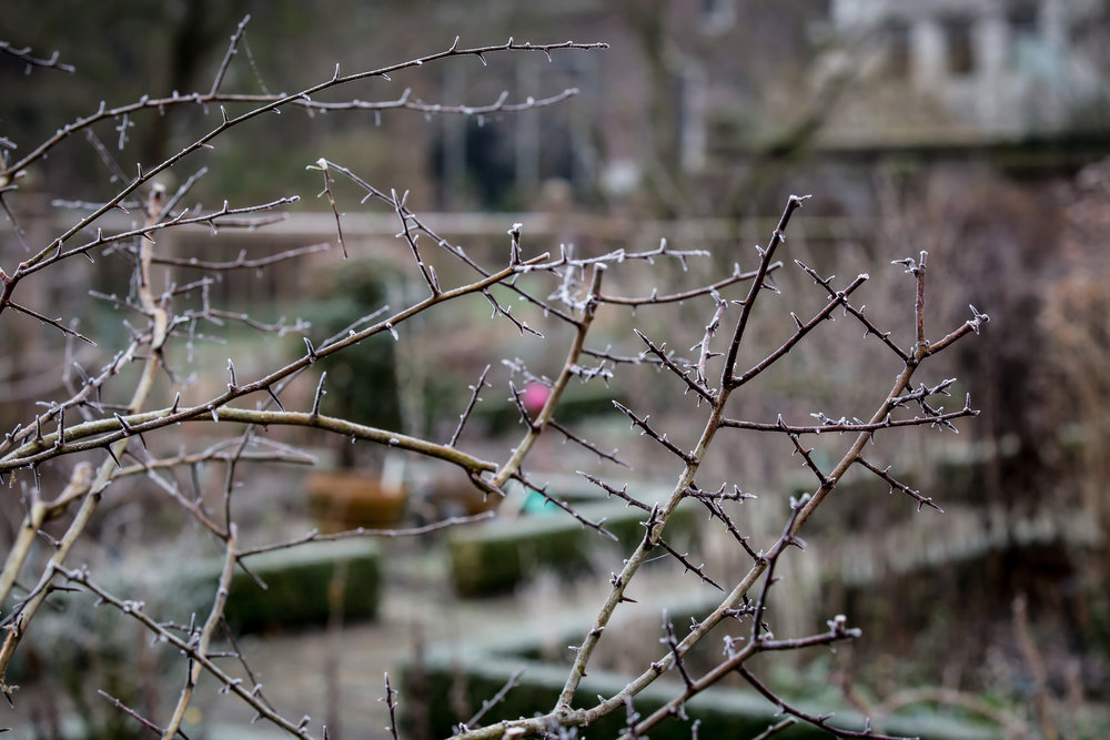 Lize Kraan | Oude Hortus winter 6.jpg