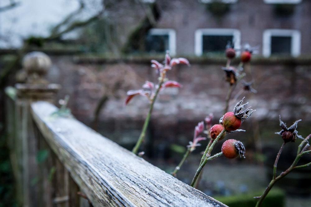 Lize Kraan | Oude Hortus winter 12.jpg