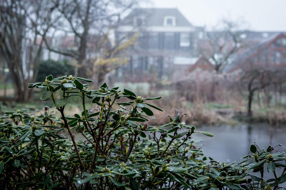 Lize Kraan | Oude Hortus winter 10.jpg