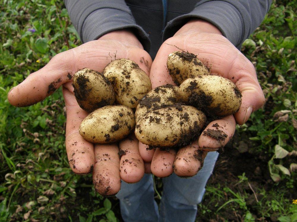 potatoes-2543686_1920.jpg