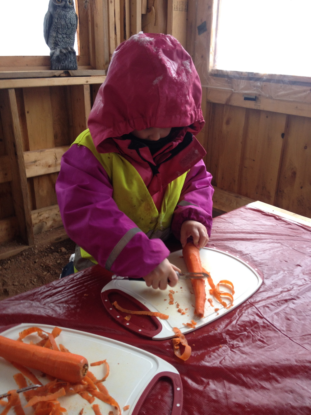 Avery used very good concentration and practiced safe behaviours while peeling her carrot with a vegetable peeler.