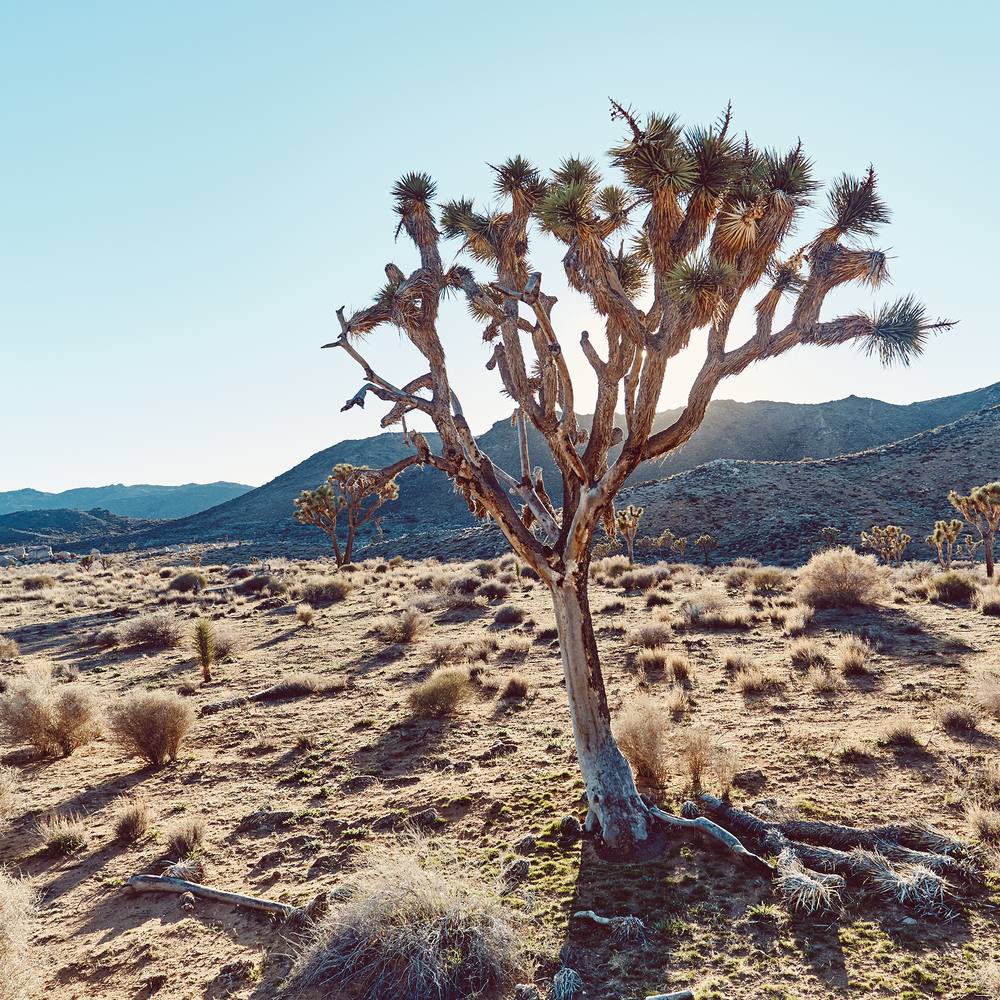 LANDSCAPE PHOTOGRAPHY BY JANE Ellen Mark