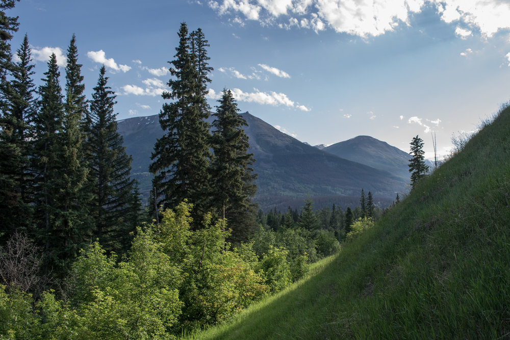 A view of Whistlers Peak through the trees in Jasper National Park, Alberta .