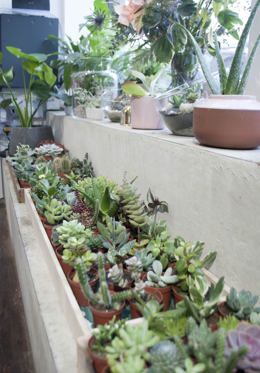 A huge collection of tiny cacti