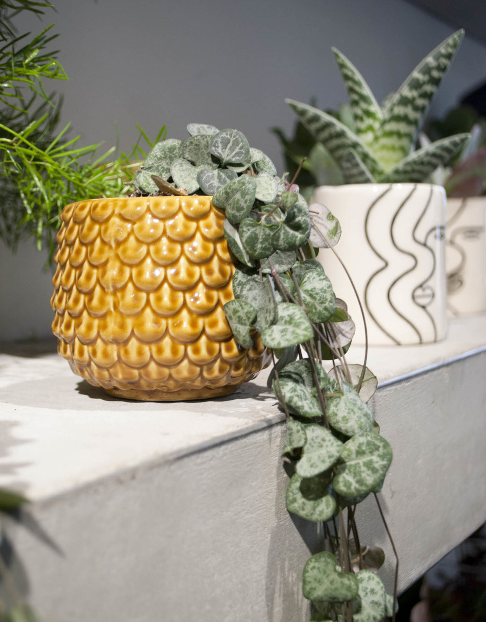 Great texture and colour on this plant and pot combo