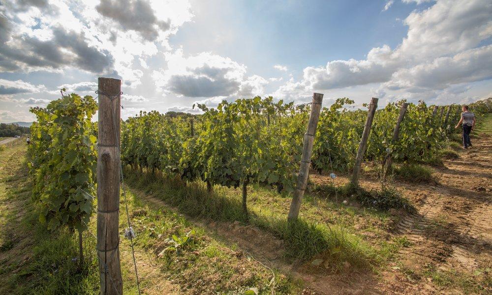 Winery_01.jpg