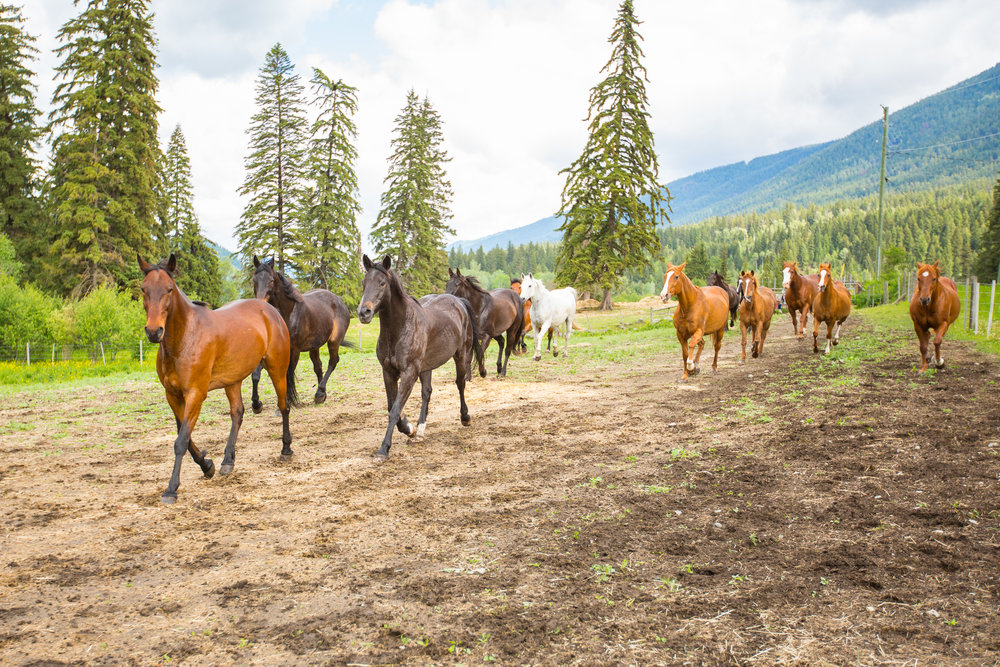 Horses - High Res-05.jpg