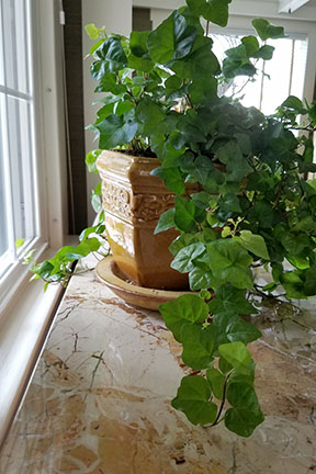 Here is an example of a live house plant.