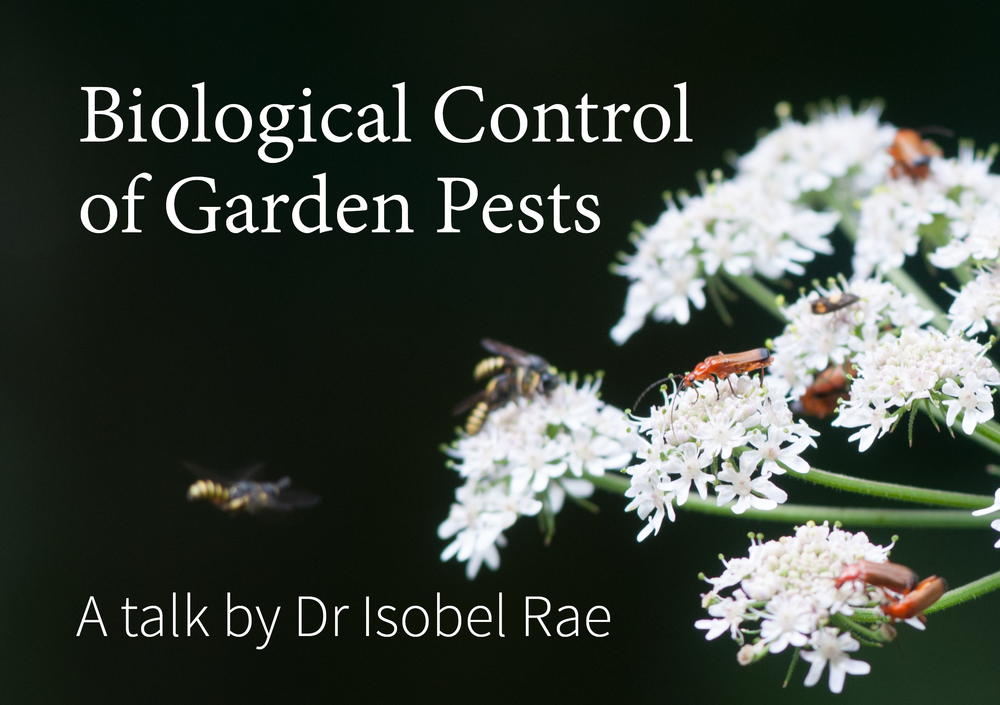 Link to Biological Control of Garden Pest talk by Isobel Rae