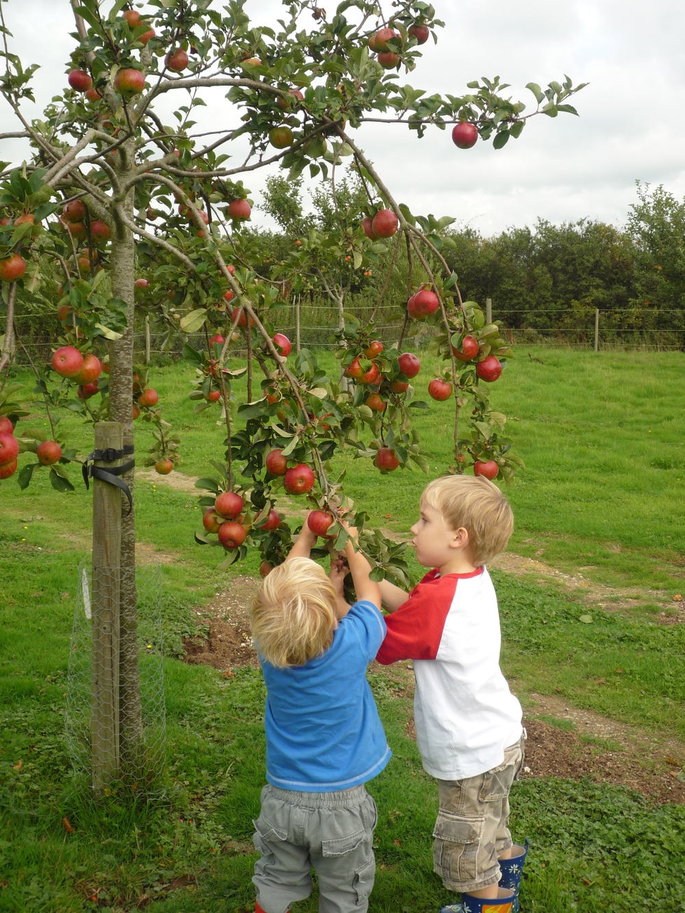 Ringmer Community Orchard