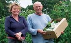 Ashurst Organics