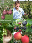 Tom Maynard Fruit Producer