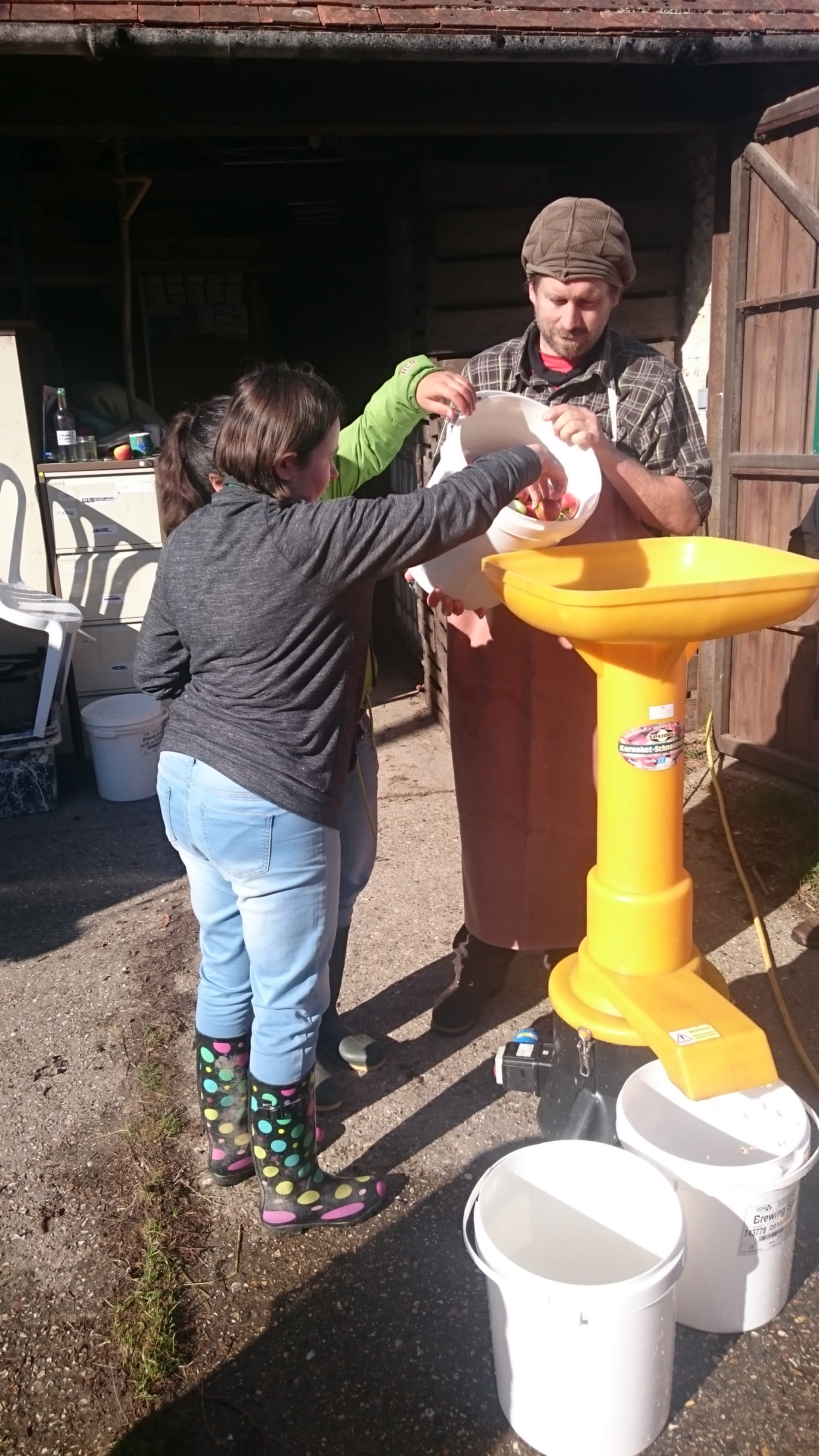 Plumpton interns at Brighton Permaculture, Stanmer Park, macerating the apples they picked at Ringmer Community Orchard