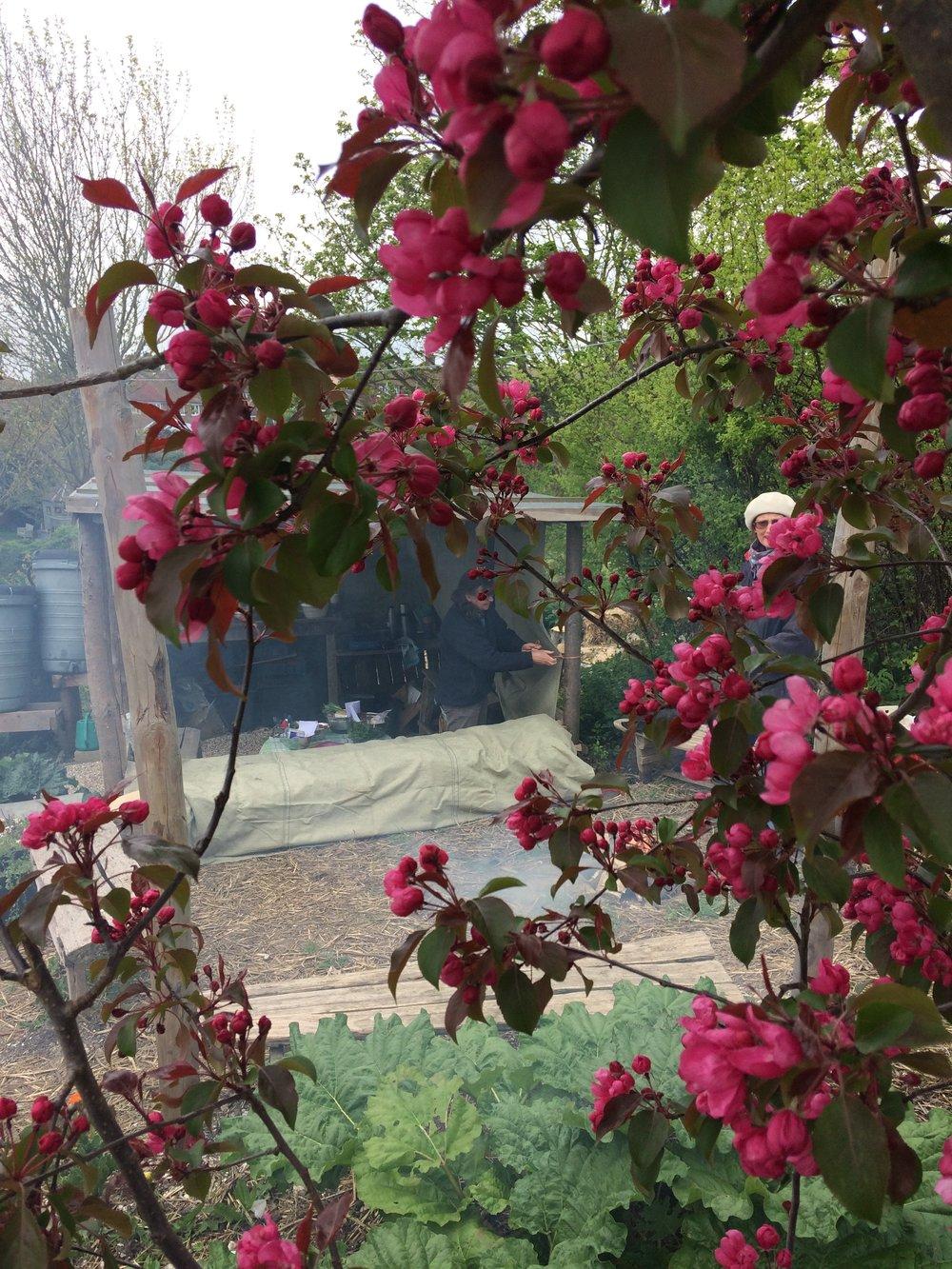 chloe edwards fire and feast lca blossom apr 2017.JPG
