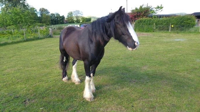 Freshly groomed pony