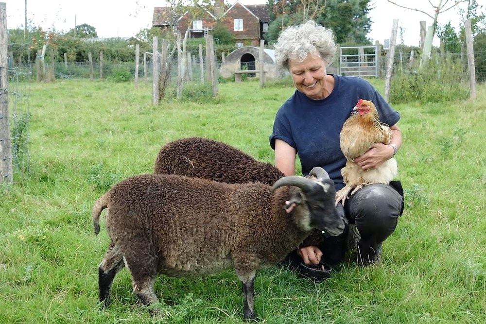 Owena with hen and new Shetland ram