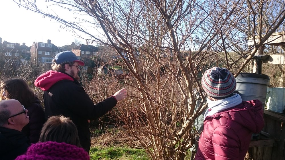 Looking at catkins