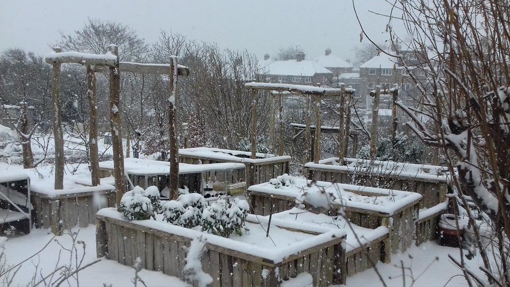 lca snow feb 18.jpg