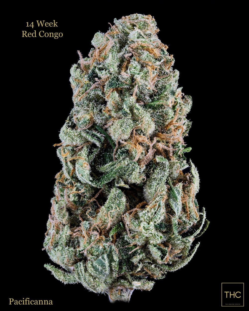 14 Week Red Congo Pacificanna THC.jpg