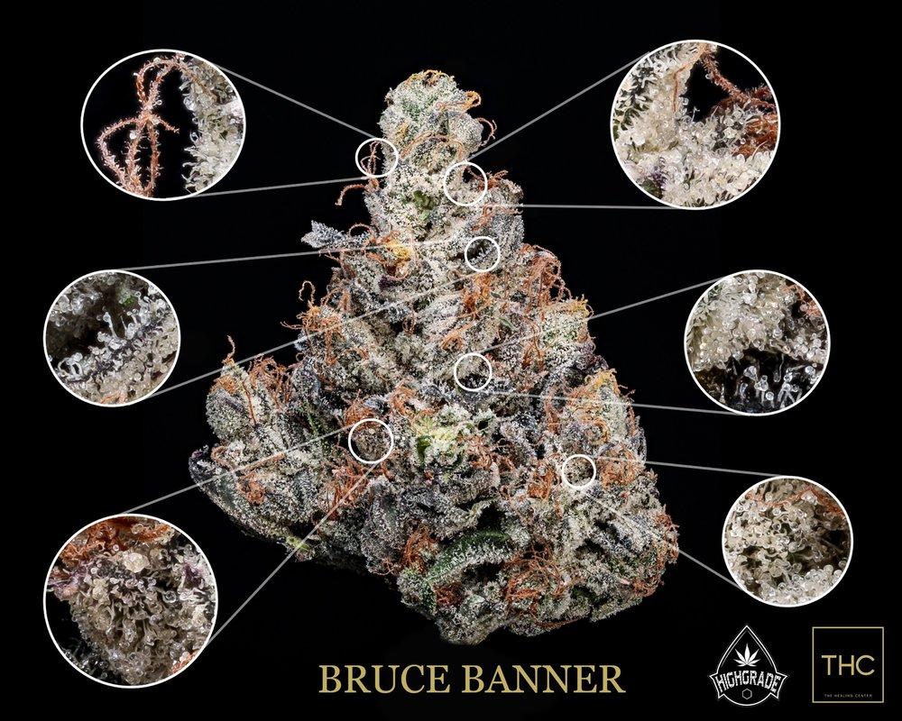 Bruce Banner Highgrade 2018 Magnified THC.jpg