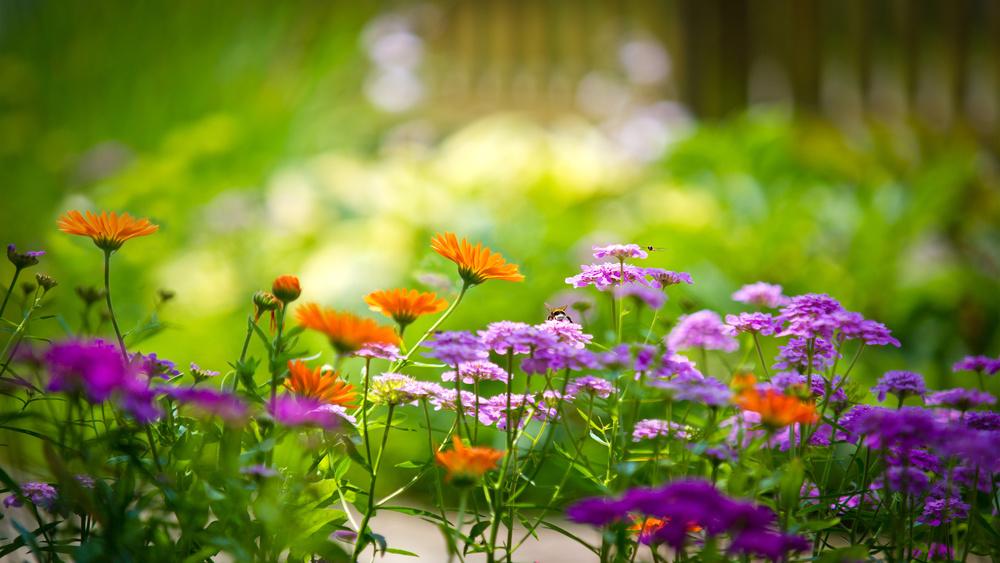 Flowers-Garden-Wallpaper.jpg