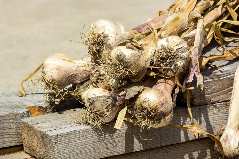 Black Garlic_9.jpg