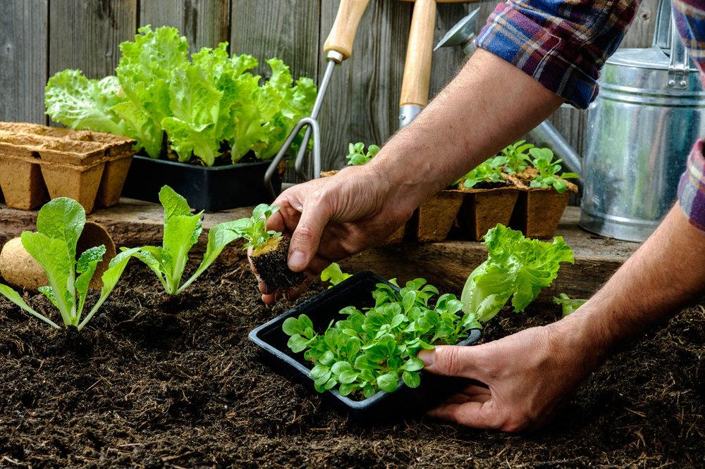start-vegetable-garden.jpg